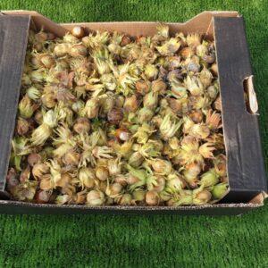 Cob nuts